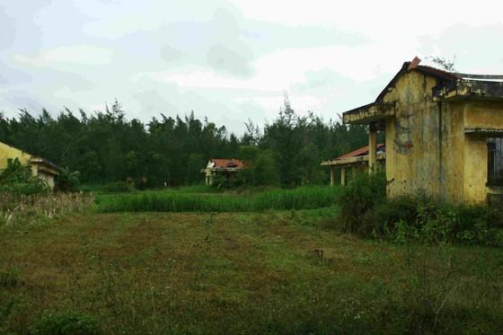 Quảng Ngãi: Khu tái định cư 11 tỷ đồng bỏ hoang 20 năm ảnh 1