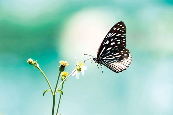 Ngắm bướm ở Mã Đà ảnh 1