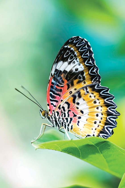 Ngắm bướm ở Mã Đà ảnh 2