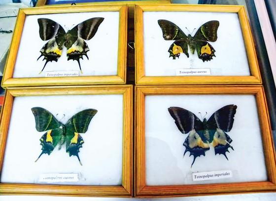 Sáng tạo nghệ thuật từ cánh bướm ảnh 1