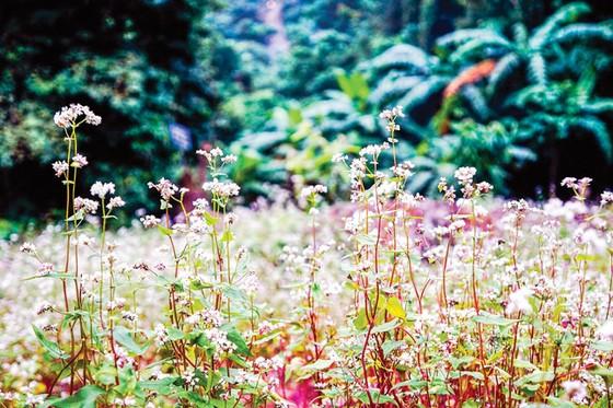 Ba Vì trong muôn sắc hoa ảnh 5