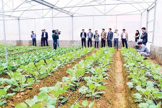 Sản xuất nông nghiệp hữu cơ: Đón xu đầu xu thế tiêu dùng bùng nổ ảnh 2
