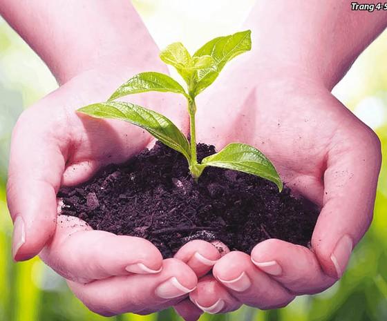 Sản xuất nông nghiệp hữu cơ: Đón xu đầu xu thế tiêu dùng bùng nổ ảnh 1