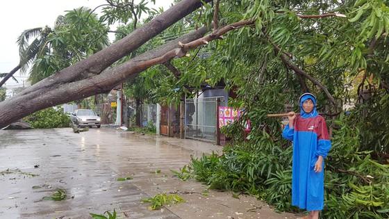 Quy Nhơn, Nha Trang tan hoang sau bão số 12 ảnh 1