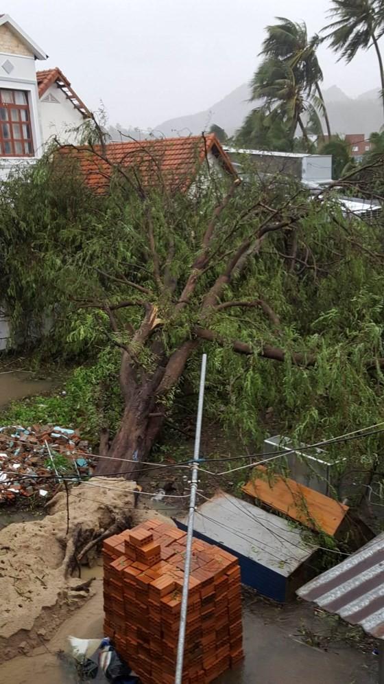 Quy Nhơn, Nha Trang tan hoang sau bão số 12 ảnh 5