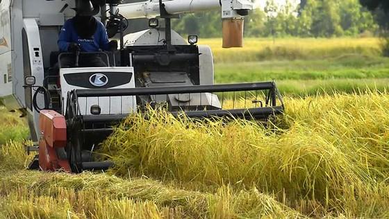 Ưu tiên nông nghiệp hiện đại ảnh 1