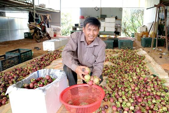 Đắk Nông phát triển cây trồng hiệu quả kinh tế cao ảnh 1
