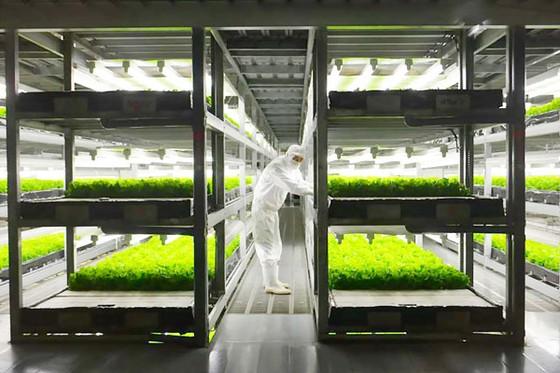 Châu Á chuộng nông nghiệp thông minh ảnh 1