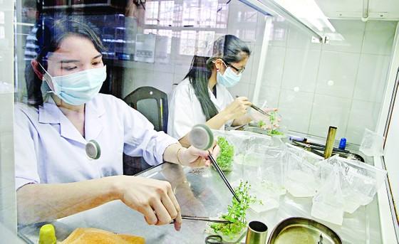 Đưa công nghệ mới vào trồng rau