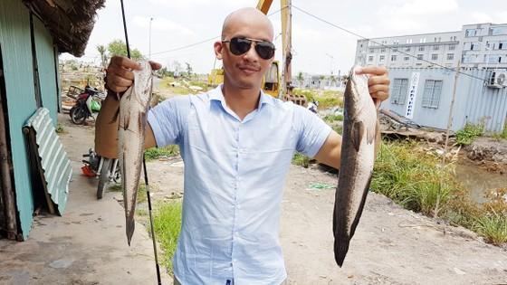 Hấp dẫn câu rê cá lóc vùng ven thành phố ảnh 1