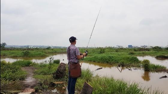 Hấp dẫn câu rê cá lóc vùng ven thành phố ảnh 4
