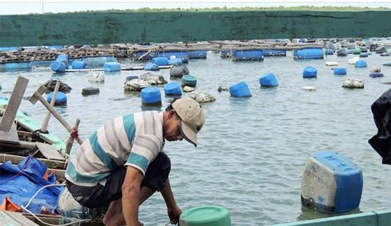 Nuôi hàu giúp dân xã đảo giảm nghèo  ảnh 2