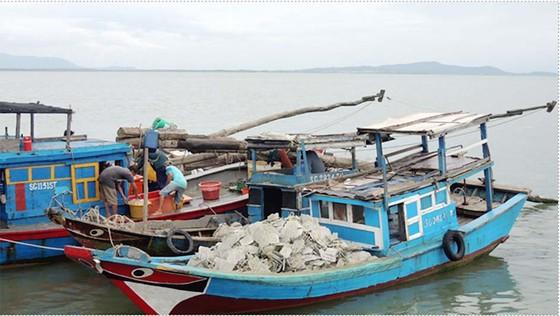 Nuôi hàu giúp dân xã đảo giảm nghèo  ảnh 1