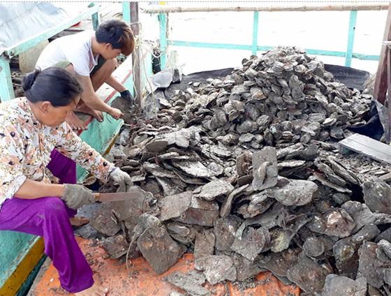 Nuôi hàu giúp dân xã đảo giảm nghèo  ảnh 4