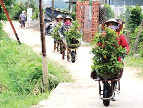 Nông dân miền Trung chuẩn bị vào mùa sau lũ bão ảnh 1