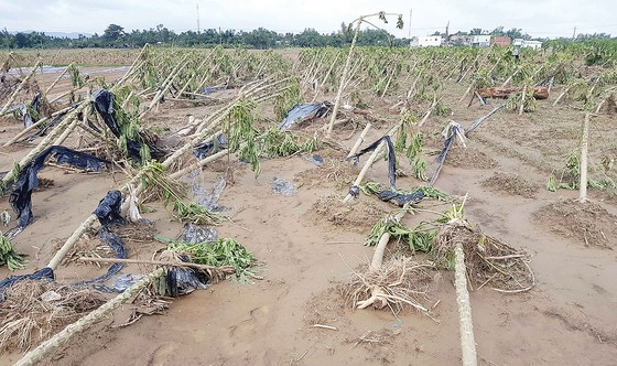 Nông dân miền Trung chuẩn bị vào mùa sau lũ bão ảnh 4