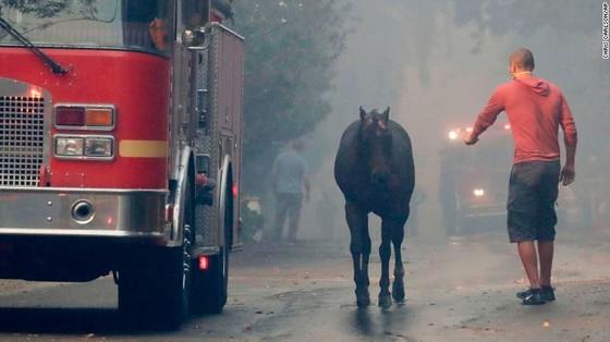 Mỹ: Cháy rừng tại Nam California tiếp tục diễn biễn phức tạp  ảnh 12