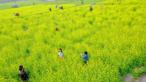 Cánh đồng hoa cải rực rỡ trong nắng đông ảnh 17