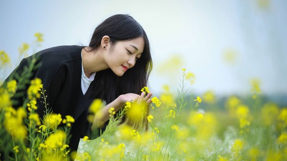 Cánh đồng hoa cải rực rỡ trong nắng đông ảnh 11