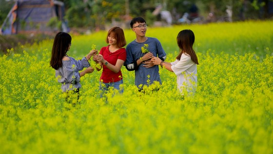 Cánh đồng hoa cải rực rỡ trong nắng đông ảnh 14