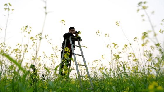 Cánh đồng hoa cải rực rỡ trong nắng đông ảnh 15