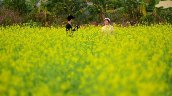 Cánh đồng hoa cải rực rỡ trong nắng đông ảnh 12