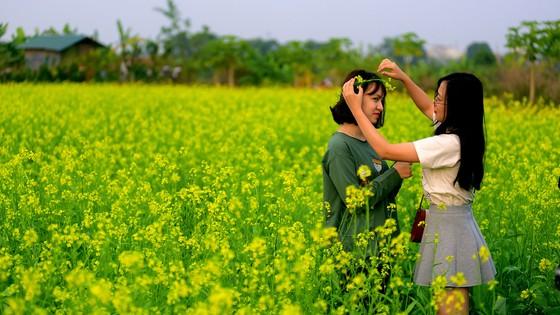 Cánh đồng hoa cải rực rỡ trong nắng đông ảnh 13