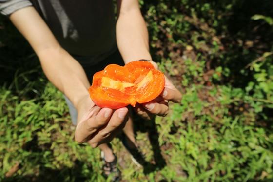 Rộn ràng mùa trái hồng ở Đà Lạt ảnh 10