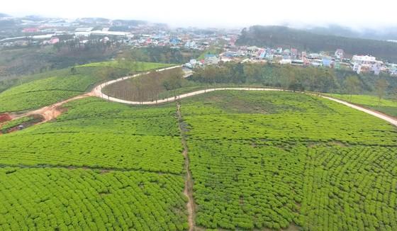 Khám phá vùng trà gần 100 năm ở Đà Lạt ảnh 10