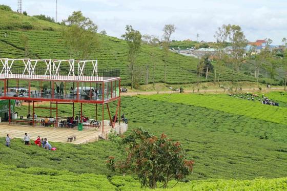 Khám phá vùng trà gần 100 năm ở Đà Lạt ảnh 6
