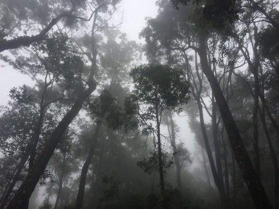 Hà Tĩnh: Phát hiện cây pơ mu 'khủng' tại Vườn quốc gia Vũ Quang ảnh 4