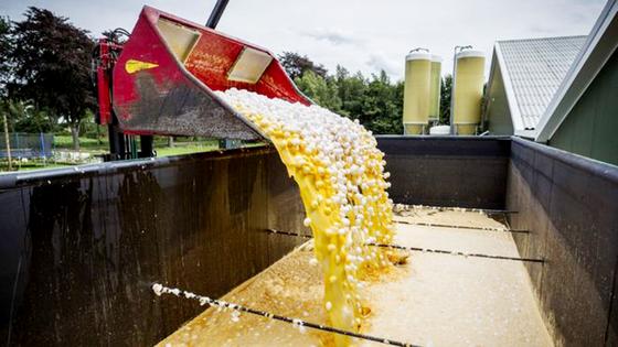 Trứng nhiễm thuốc trừ sâu và nỗi lo thực phẩm chứa chất độc hại ảnh 1
