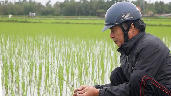 Khó xây dựng thương hiệu gạo hữu cơ ảnh 1