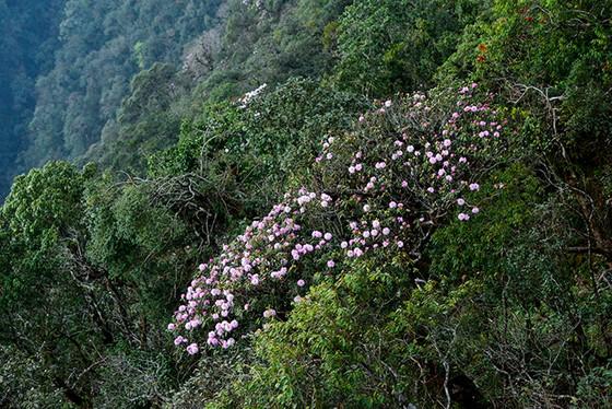 Tôi thấy hoa vàng trên đồi xanh Fansipan ảnh 8