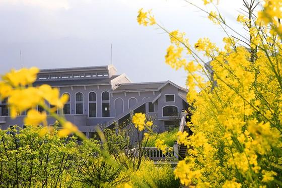 Tôi thấy hoa vàng trên đồi xanh Fansipan ảnh 7