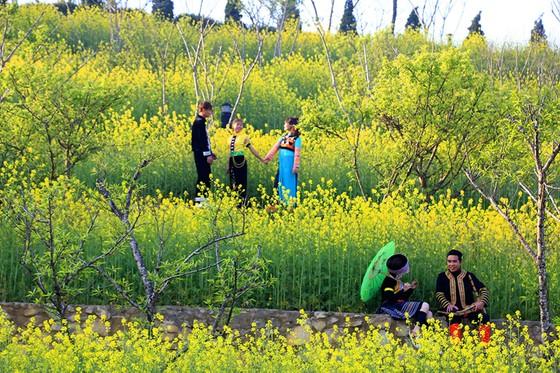 Tôi thấy hoa vàng trên đồi xanh Fansipan ảnh 5