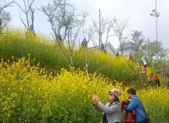 Tôi thấy hoa vàng trên đồi xanh Fansipan ảnh 2