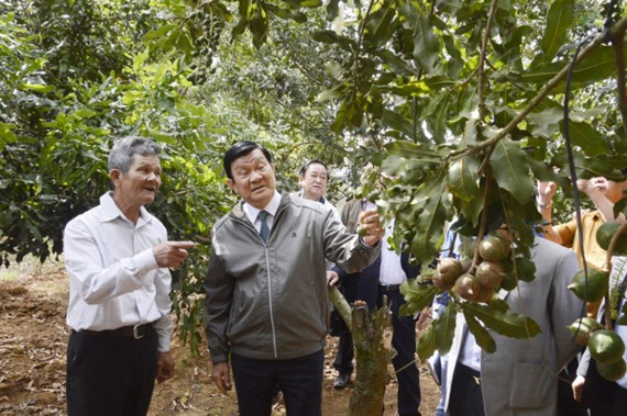 Former President Truong Tan Sang visits a macadamia farm in the highland province of Lam Dong  (Photo: SGGP)