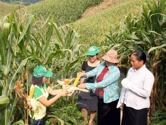 Vietnamese farmers on a corn field (Illustrative image - Source: VNA)