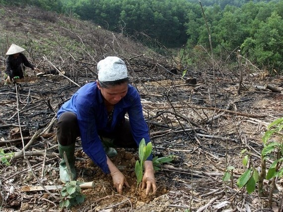 Residents are encouraged to involve in planting and managing forests (Source: VNA)