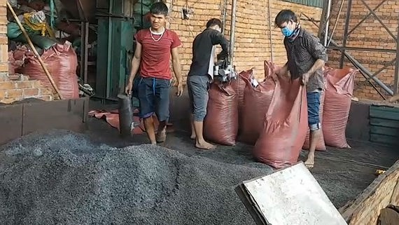 Black power inside batteries is used to dye coffee at the family-run coffee production facility in Dak Nong Province (Photo: SGGP)