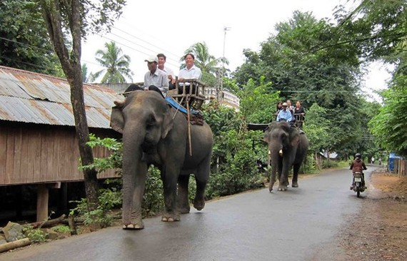 Before, visitors pay for elephant riding in the park (Photo: SGGP)