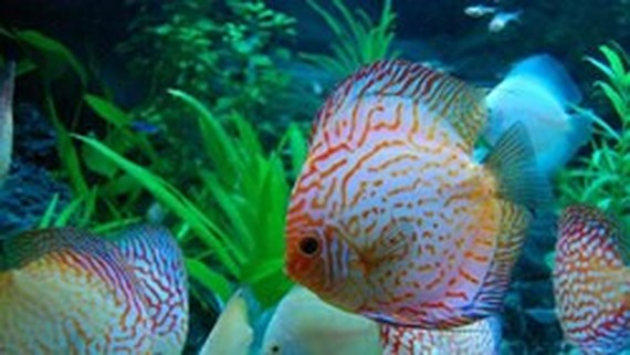 City's ornamental fish exporters target to earn $22 million
