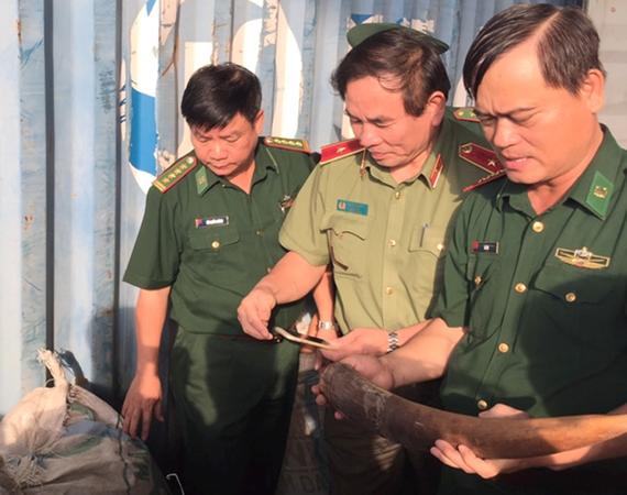 Ten tons of tusks, pangolin scales seized in Tien Sa port