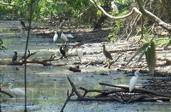 Ca Mau bird garden causes serious pollution