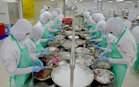 Seafood processing at Trung Son company. Illustrative image (Source: VNA)