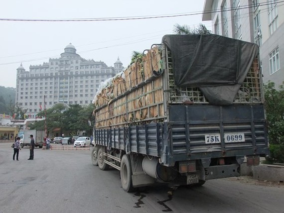 Vietnamese vegetables & fruits to China must be traced origin from April 1