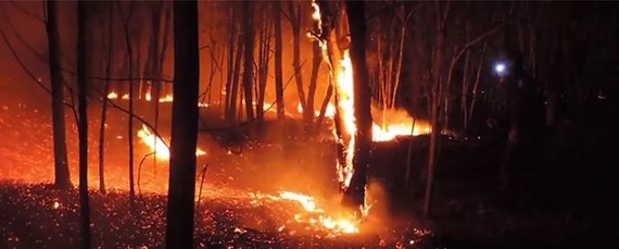 More than 30 hectares of forest are completely destroyed