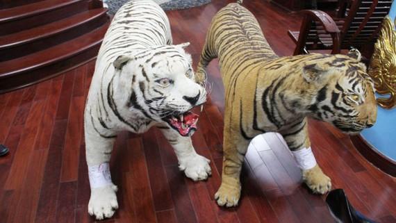 Hai bộ da thú nhồi động vật được xác định là của loài hổ quý, hiếm được ưu tiên bảo vệ. Ảnh C.A