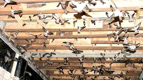 TPHCM: chỉ 3 quận, huyện được nuôi chim yến